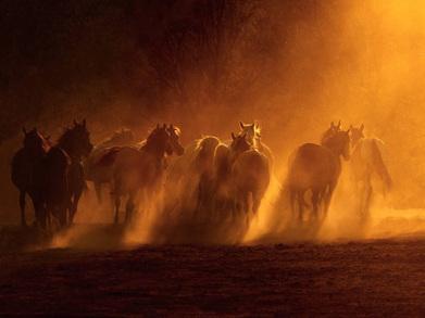 Les photos de chevaux de Wojtek Kwiatkowski  (galerie) | Salon du Cheval | Scoop.it