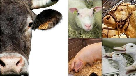 Testez vos connaissances sur le Salon de l'Agriculture | Information sur les métiers, l'orientation et la formation | Scoop.it