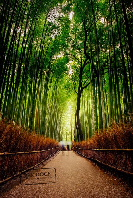 Rainy Arashiyama | My Photo | Scoop.it