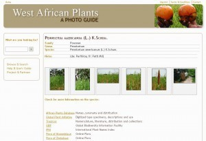Photoguide to West African plants online | Herbaria | Scoop.it | Agricultural Biodiversity | Scoop.it