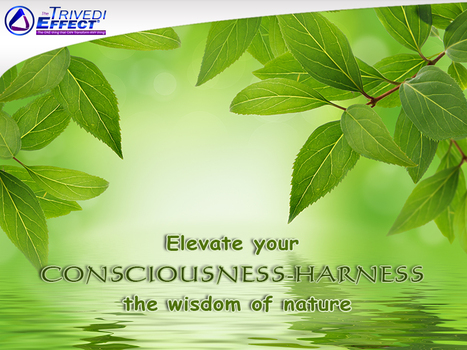 Join us for the Trivedi Retreat to elevate your consciousness | Health and Wellness | Scoop.it