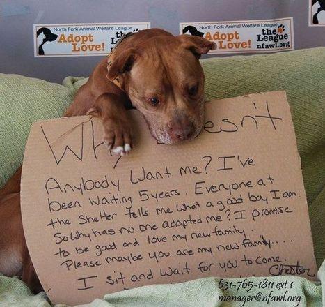 Une famille adopte finalement cet adorable chien qui a passé 5 ans dans un refuge   CaniCatNews-actualité   Scoop.it