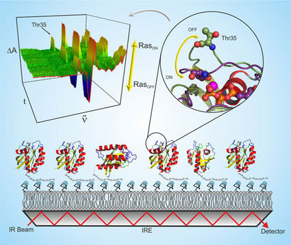 Infrared spectroscopy: Interaction between proteins and - Nanowerk | Visualisation | Scoop.it