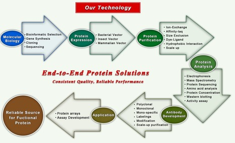 Bio-Synthesis, Inc. - Protein Services | Peptide Synthesis | Scoop.it