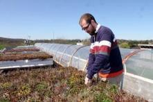 Green roof design may help control urban runoff - Phys.Org | Vertical Farm - Food Factory | Scoop.it