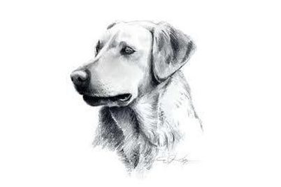 Bailey's Choice Dog Treats Recalls Chicken Jerky Treats | petMD | Interesting & Odd Pet Topics | Scoop.it
