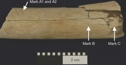 Human ancestors used tools earlier than previously thought? | Aux origines | Scoop.it