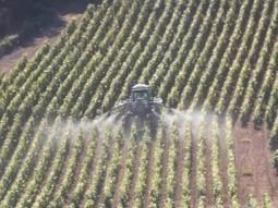 Des pesticides inefficaces et dangereux sont toujours épandus dans le vignoble ! | Toxique, soyons vigilant ! | Scoop.it