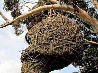 Awesome Nest for Humans Hangs From the Trees | Vertical Farm - Food Factory | Scoop.it