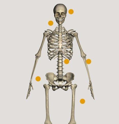 Corpus. Decouvrir le corps humain en 3D | Articles Educations & MOOC & e-Formations | Scoop.it