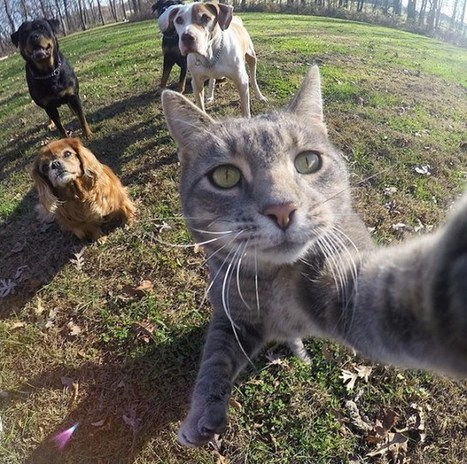 Cat selfie: the next copyright battle?   TechnoLlama   Copyright news and views from around the world   Scoop.it