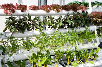 U.S. Food and Job Crises Spawn New Green Farming Coalition   World-Wire   Food issues   Scoop.it