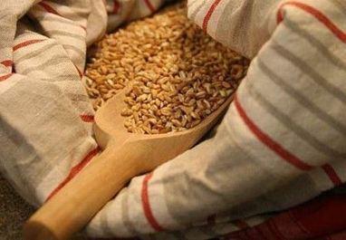 Alzare il sistema immunitario: farro e zucca, un cereale e un ortaggio che intestino, prostata e cuore adorano. | Consigli per il Stare Bene | Scoop.it