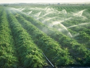 Agriculture Crop Protection Products India | aristobiotech | Scoop.it