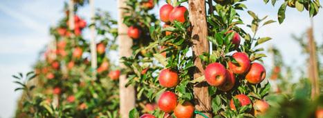 La transition agroécologique nécessite un changement global du système agricole français   Veille environnement et développement durable   Scoop.it
