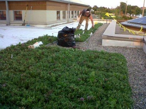 Nicholas Conservatory installing green roof garden - WREX-TV | Vertical Farm - Food Factory | Scoop.it