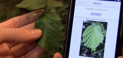 Pl@ntNet : l'équivalent de Shazam pour identifier les fleurs | Bibliothèque et Techno | Scoop.it
