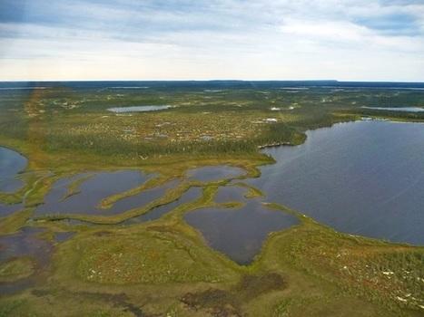 Global warming threatens Hudson Bay Lowlands Arctic refuge   Climate change challenges   Scoop.it