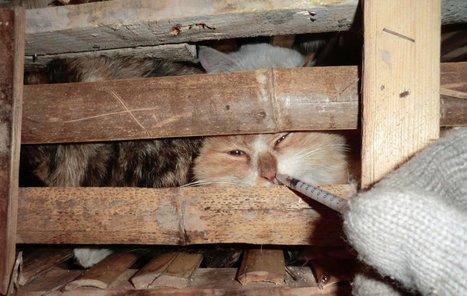 Amid Suffering, Animal Welfare Legislation Still Far Off in China | Nature Animals humankind | Scoop.it