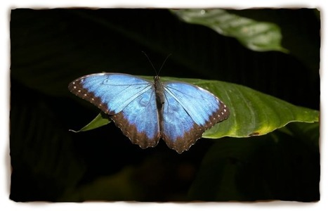 Butterfly Facts For Kids: Butterfly Pictures, Butterfly Information | San Diego Zoo - Kids | San Diego Zoo - Kids | Butterflies | Scoop.it