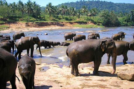 Sri Lanka, la petite île qui monte | Actu & Voyage au Sri Lanka | Scoop.it