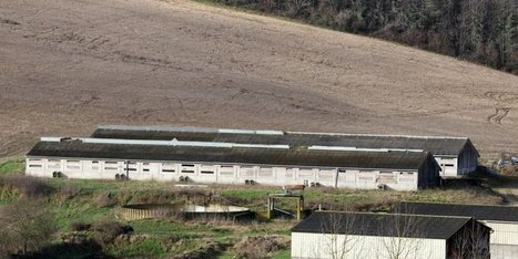 Bras de fer autour de la filière d'élevage | Agriculture en Dordogne | Scoop.it