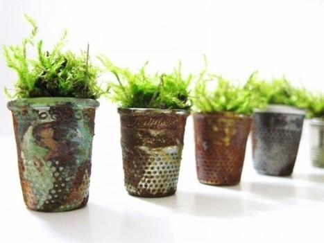 #Vintage #Thimble #Planters and #Moss #Terrariums. #nature #art  | Luby Art | Scoop.it
