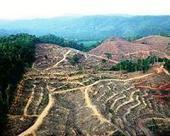 How global forest-destroyers are turning over a new leaf | Sustain Our Earth | Scoop.it