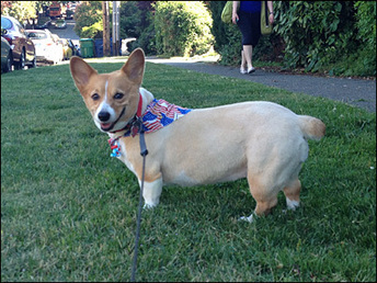 Protect your pets this July 4th | Troy West's Radio Show Prep | Scoop.it