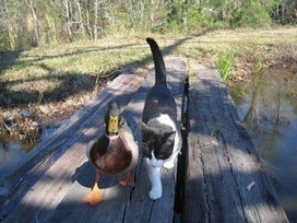 Sammy and His Quacky Friend | My Frynds Scoops | Scoop.it