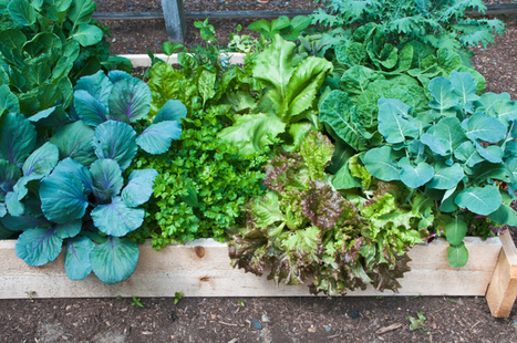 How to Start a No-Dig Vegetable Garden | Occupy Monsanto | 100 Acre Wood | Scoop.it