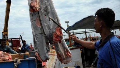 EU tightens ban on shark finning | Farming, Forests, Water & Fishing (No Petroleum Added) | Scoop.it
