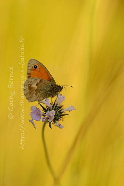 Photo macro de papillon   Cathy Bernot   Liens photo pour les yeux   Scoop.it