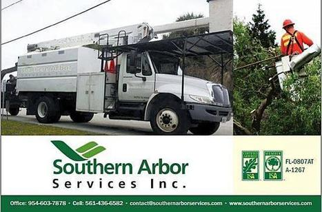 Mid Florida Tree Servic | SOUTHERN ARBOR SERVICES INC. | Scoop.it