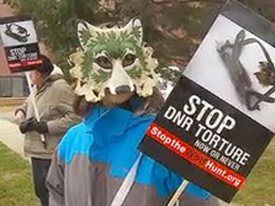 Minnesota Just Another Wolf Killing State AfterAll… | Oceans and Wildlife | Scoop.it