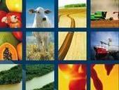 Exportações do agronegócio brasileiro já somam US$ 88,65 bi | Geoflorestas | Scoop.it