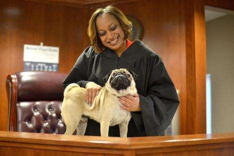 Adorable Blind Pug and Judge Are Inseparable Best Friends | Le It e Amo ✪ | Scoop.it