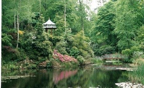 Jungle Garden | Cool Sites I love | Scoop.it