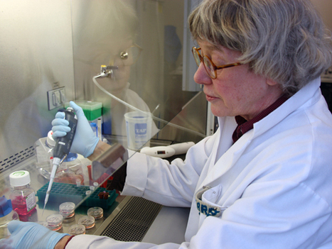 New cell line should accelerate embryonic stem cell research - Phys.Org | Stem-Cells | Scoop.it