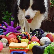 ¿Por qué tu perro te trae una zapatilla cuando tú le pides la pelota? | ciencia aplicada a bioquimica | Scoop.it