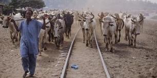 La Côte d'Ivoire réhabilite ses ranchs pour produire plus de viande | Afrique: développement durable et environnement | Scoop.it