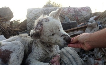 Dog Rescued from Trash Dump Befriends Pup Saved from Drainpipe | This Gives Me Hope | Scoop.it