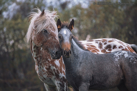 "::: 'With Mother""  by Aha Berlezova, Photographer 