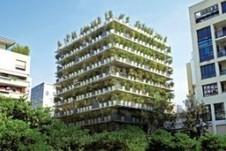 Bambou : petit jardin et terrasse conseils Bambous Truffaut | les bambous | Scoop.it