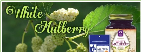 White Mulberry TeaWhite Mulberry Tea – Organic Berries – White Mulberry Supplements on Sale | Health Supplements in the News | Scoop.it