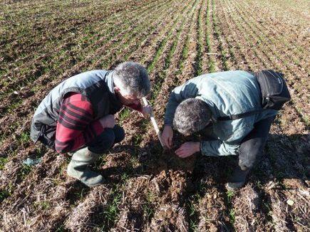Produire sur sol vivant: l'agriculture qui mise tout sur la nature | l'AEI agriculture ecologiquement intensive | Scoop.it