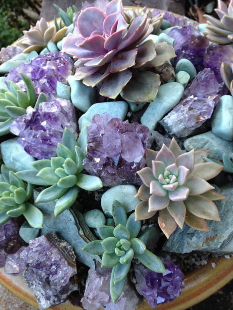 Add crystals and coral to your container garden designs | Gardening Life | Scoop.it
