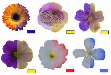 Les abeilles et les fleurs communiquent grâce au courant électrique | EntomoNews | Scoop.it