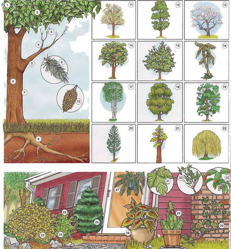 Trees plants and flowers vocabulary PDF - Learning English vocabulary and grammar | Learning Basic English, to Advanced Over 700 On-Line Lessons and Exercises Free | Scoop.it