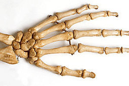 Skeletal System - By KidsBiology.com | Human Body Systems | Scoop.it